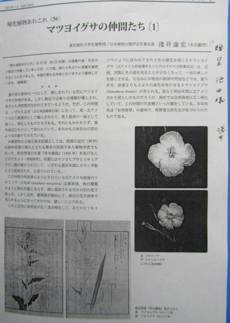 7‐3 <マツヨイグサの仲間たち(1)>淺井康宏2019著6頁.jpg