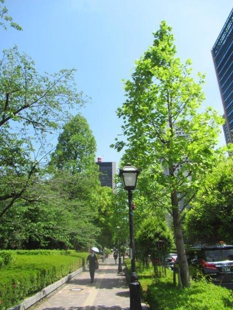 ①-6 日比谷公園・南街路樹.jpg