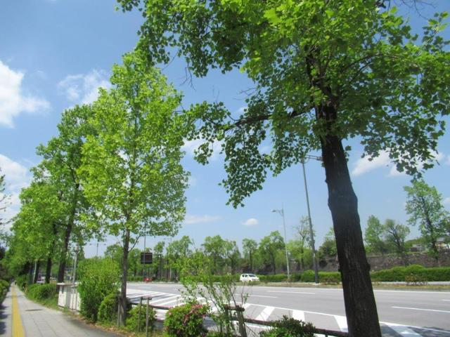 ③-1 日比谷公園北・晴海通り.jpg