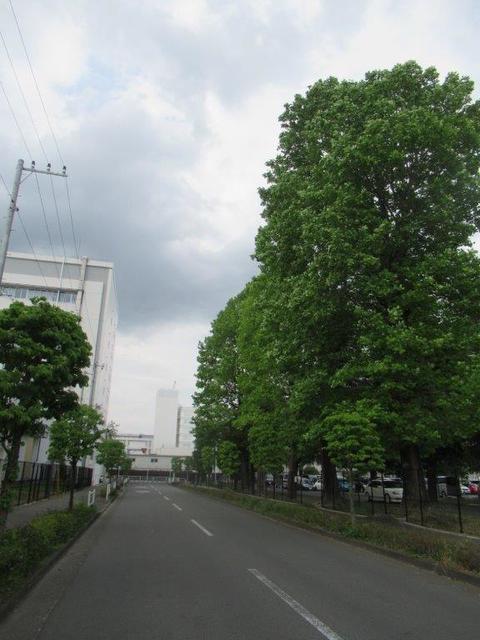 ③-3 小平BS中央通り―3.jpg