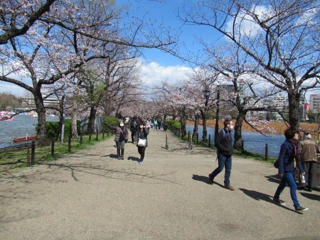 ④-1 上野公園不忍池.jpg