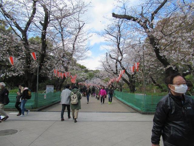 ④-3 上野公園櫻並木.jpg