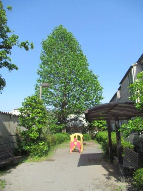 ⑤-2 小平天神シラカシ公園-2.jpg