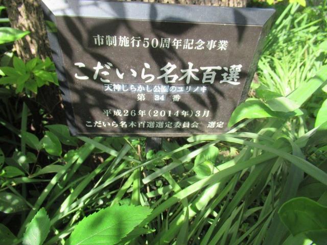 ⑤-3 小平天神シラカシ公園-3.jpg