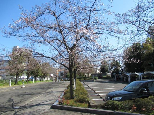 ⑤-3 JT生命誌研究館・桜並木.jpg