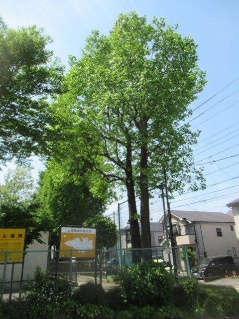 ⑥-1 小平14小学校-1・正門脇.jpg