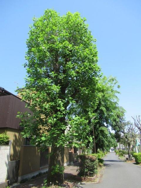 ⑥-3 東村山市営住宅.jpg