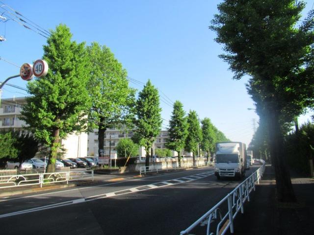 ⑦-1 滝山団地・銀杏並木とユリノキ.jpg