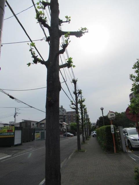 ⑦-3 小平鈴木町-3.jpg