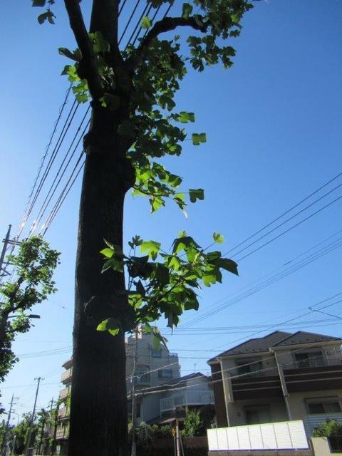 ⑧-4 東大和市ユリノキ通り-4.jpg