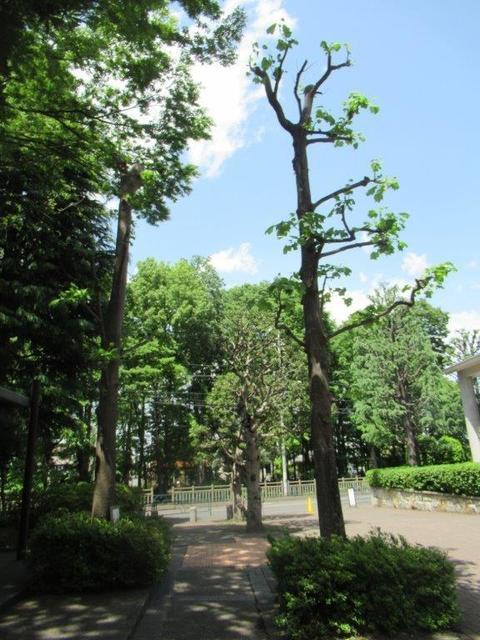 ⑨ー1 ガーデンハイツ小平-1.jpg