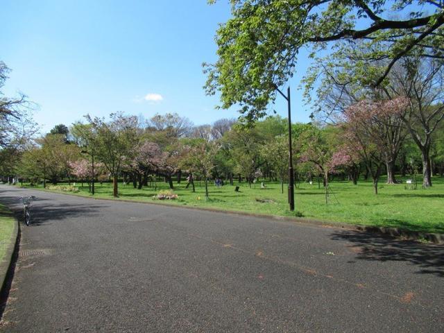 ⑩-6 小金井公園西側の山桜他.jpg