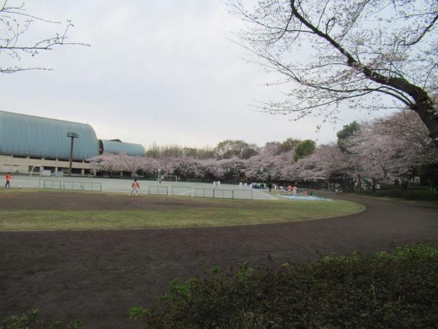 写真① 小平中央公園 (1).jpg