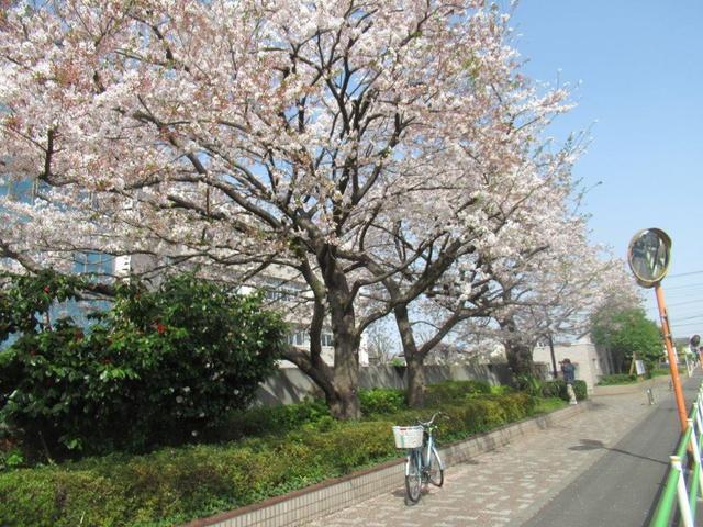 写真①-4 小平高校前.jpg