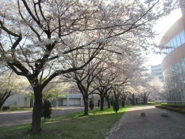 写真②-1 小平市・一橋大学.jpg