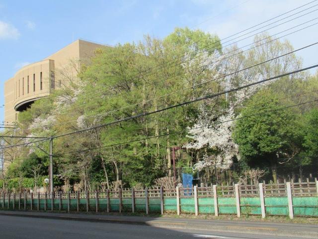 写真②-1 小平市役所.jpg