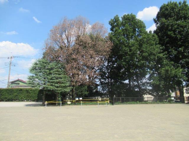 写真②-1 小平福祉会館前・クヌギの枯れ木―1.jpg