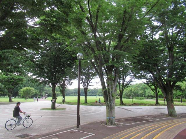 写真②-1 東村山広場の遠景.jpg