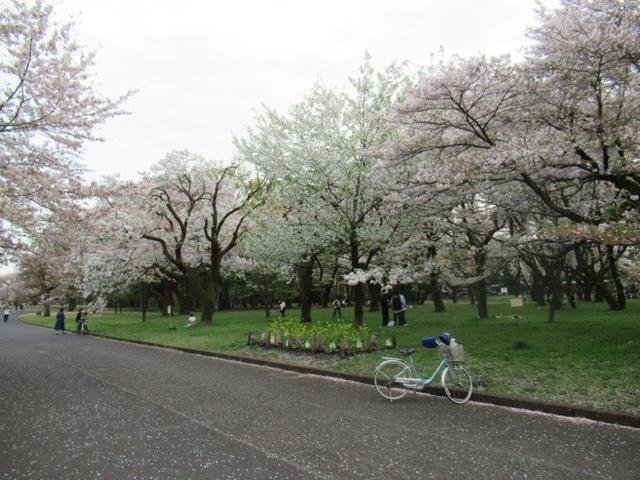 写真④-1 小金井公園(西).jpg