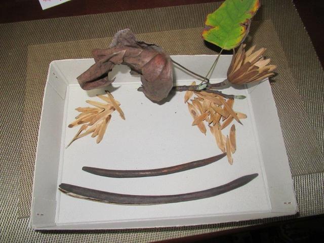 写真④-3 ユリノキの種子とハナキササゲの種子鞘.jpg