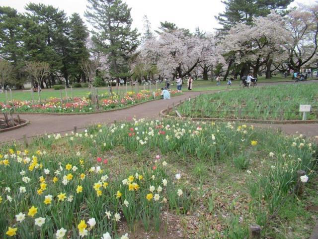 写真④-3 小金井公園・西花壇.jpg