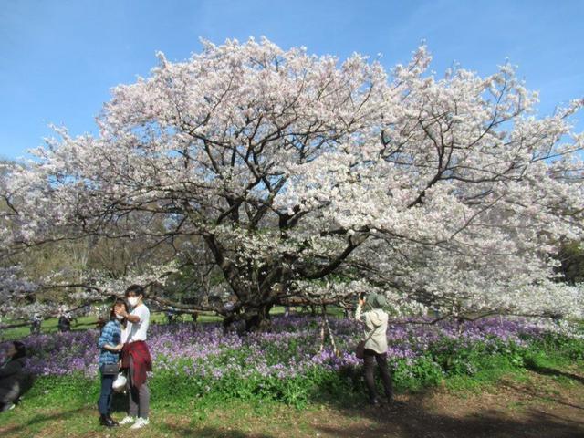 写真④-5 小金井公園 ソトオリヒメ.jpg