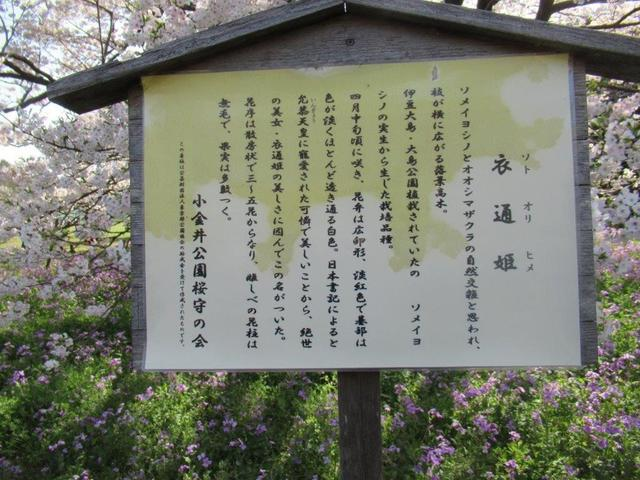 写真④-6 小金井公園 ・衣通姫ソトオリヒメ.jpg