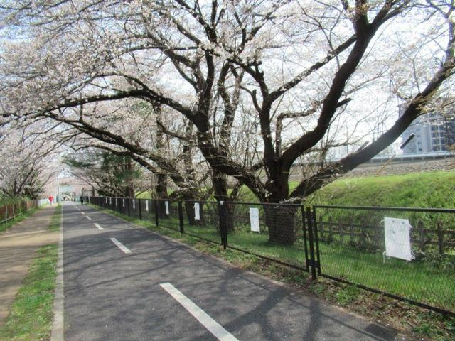 写真⑤-1 多摩湖遊歩道・東村山浄水場の南.jpg