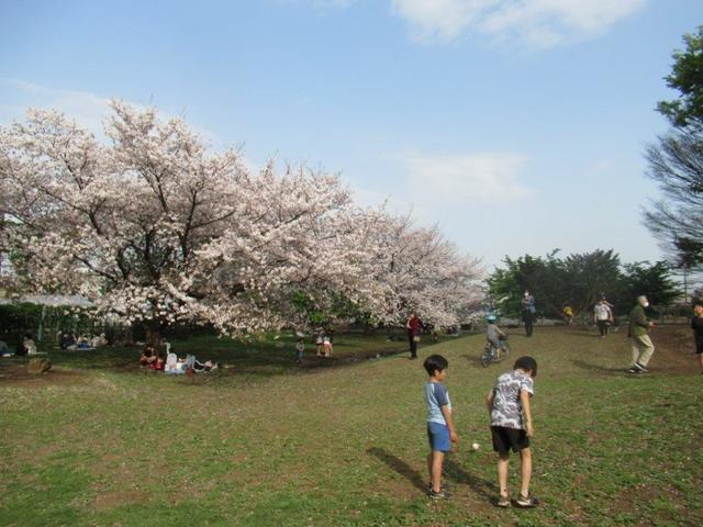 写真⑤-1 小平市・タケノコ公園.jpg