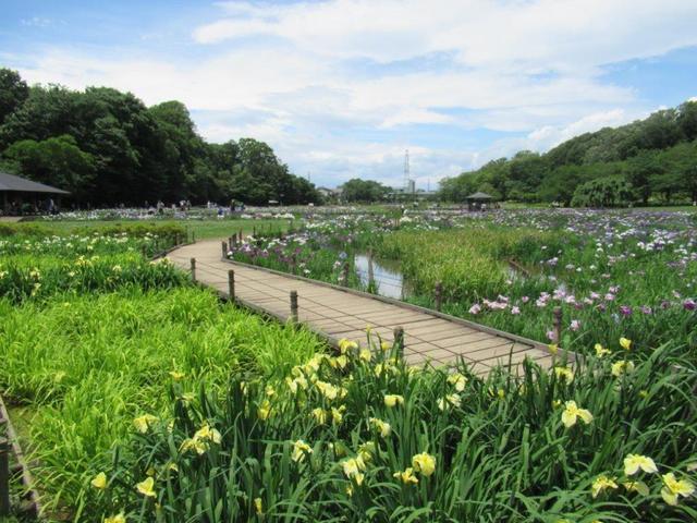 写真⑤-4 花菖蒲園.jpg