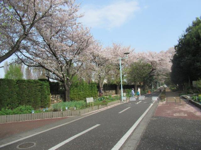 写真⑥ 花街道花壇.jpg