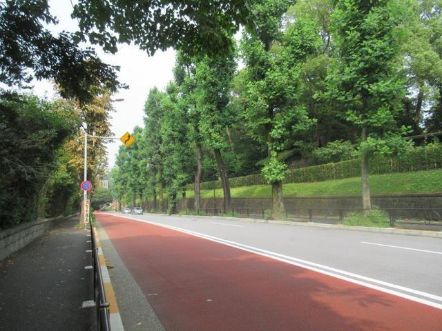 写真⑦ 赤坂迎賓館南 ユリノキ並木.jpg