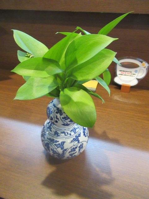 写真⑦-1 ルスカス、喫茶店・ロダンの開店祝いの花から.jpg