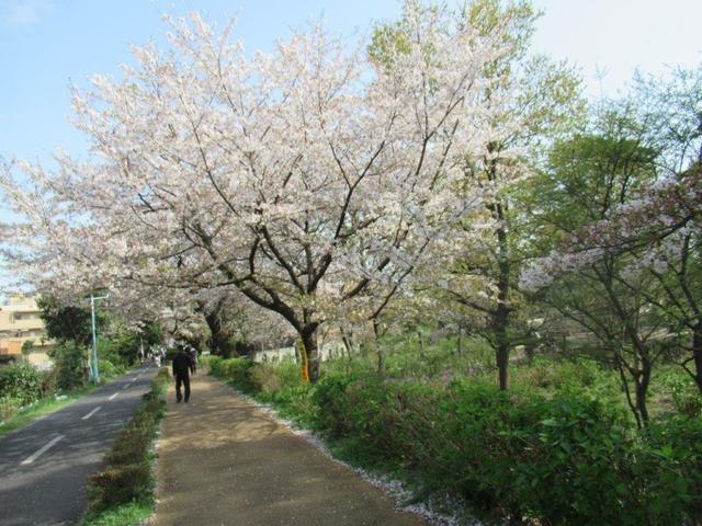 写真⑦-1 小平市・アジサイ公園(1).jpg