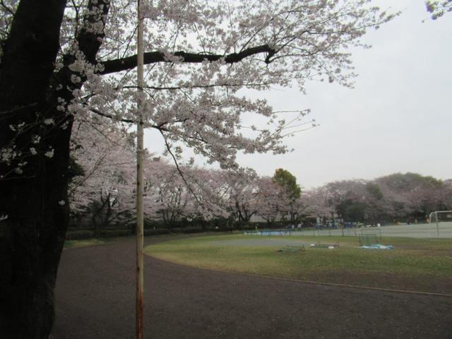 写真⑩ 小平中央公園(2).jpg